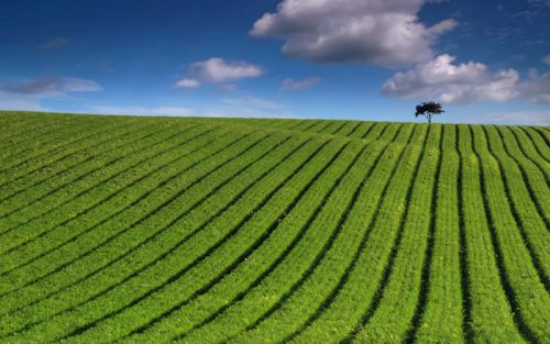 b_500_0_16777215_00_images_stories_shkola_kompozition_green-landscape-windows7.jpg